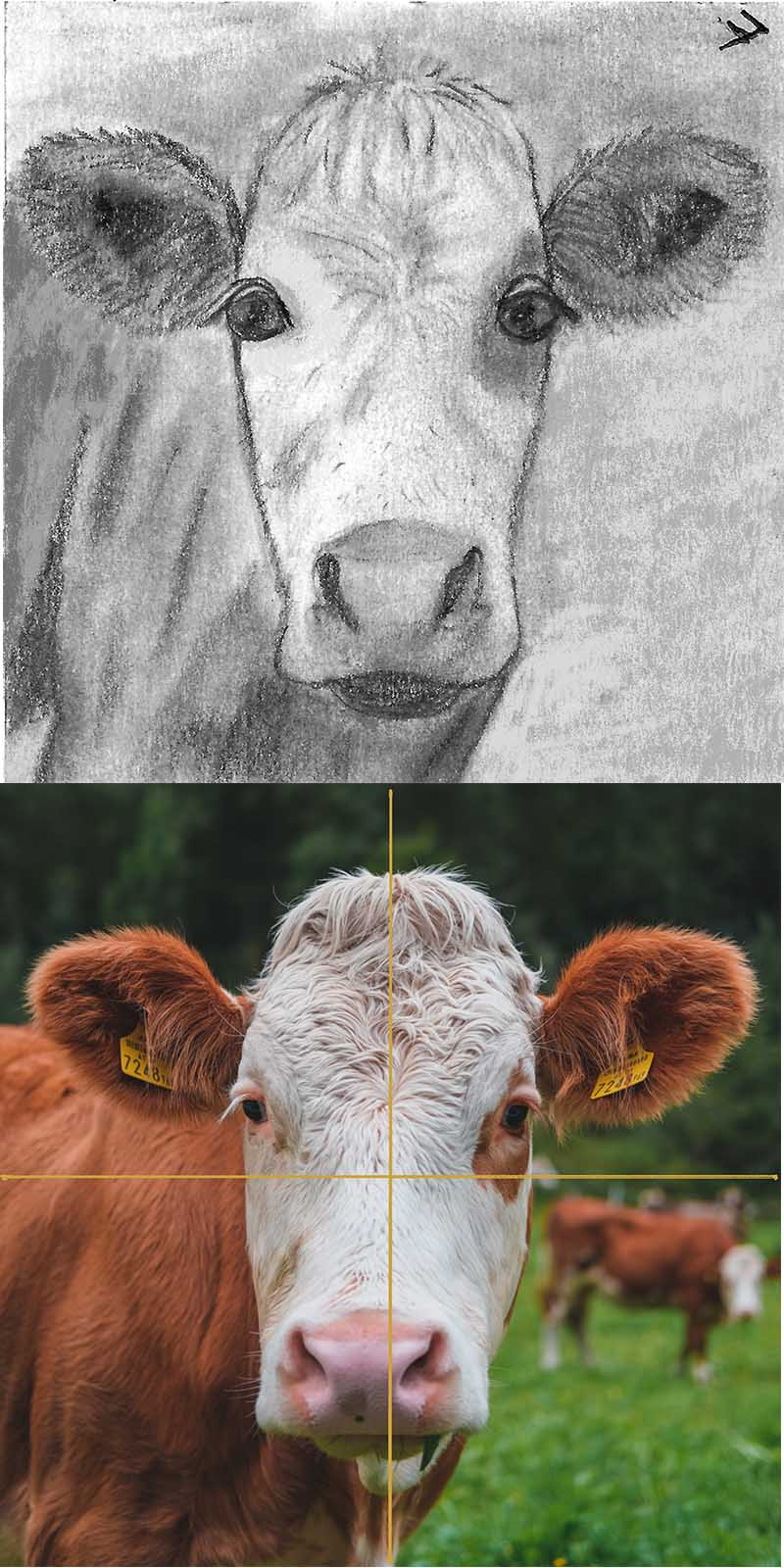 For #the100dayproject https://the100dayproject.org/  The cow reference photo is by Thomas Oldenburger on www.unsplash.comI plan to draw a picture of an animal each day.