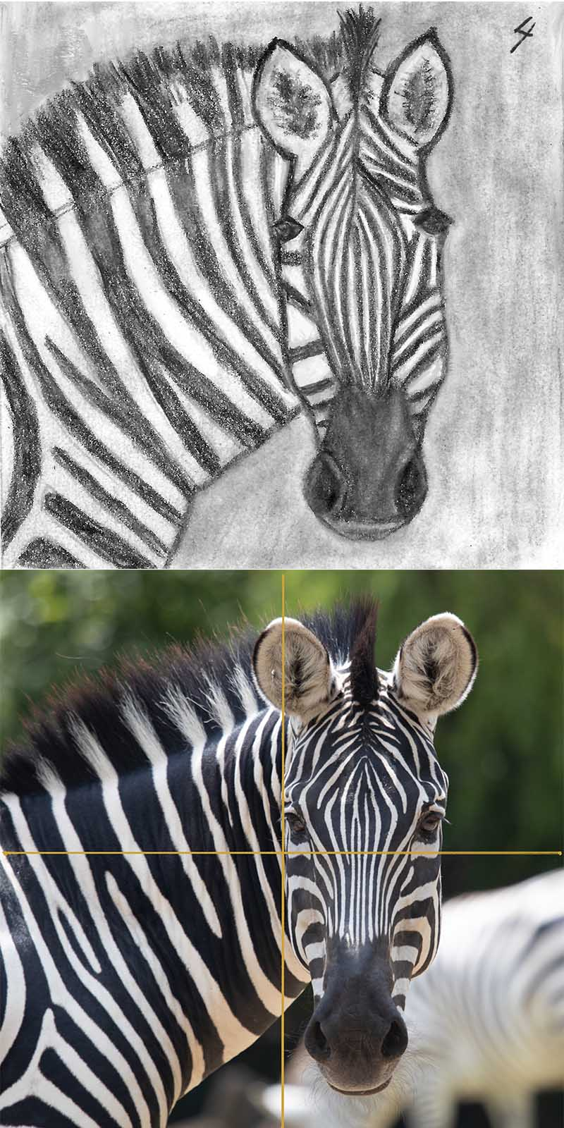 For #the100dayproject https://the100dayproject.org/ I Zebra reference photo by Gerhard Crous on www.unsplash.com plan to draw a picture of an animal each day.